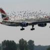 Дроны будут отгонять стаи птиц от аэропортов
