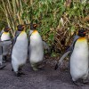 WireGuard «придет» в ядро Linux — почему?