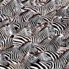 Теория счастья. Закон зебры и чужой очереди