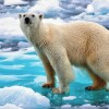 Обнаружена новая угроза для арктического льда