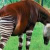 Лесной жираф: 7 интересных фактов