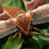Когда у бабочек были челюсти: необычное открытие