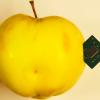 Intel ME Manufacturing Mode — скрытая угроза, или что стоит за уязвимостью CVE-2018-4251 в MacBook
