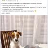 SMMщики IKEA замаскировали сексизм и мизогинию смешной собачкой. За пару дней их смогли убедить, что так делать не надо