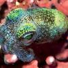 10 самых необычных головоногих из глубин океана
