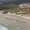На берег в Новой Зеландии выбросились практически 150 черных дельфинов