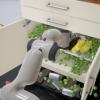 Nvidia сошла с ума и открывает PhysX под BSD-3