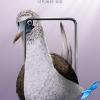 Honor изящно обыграла дырявый экран смартфона Honor View 20 при помощи… экзотических птиц