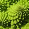 Генетика сорта Романеско: фрактальная математическая модель экспрессии генов