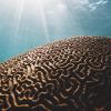Восстановление когнитивных способностей 100 пациентов (перевод статьи Дейла Бредесена)