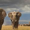 Технологии Intel легли в основу камеры TrailGuard AI, которая будет помогать выслеживать браконьеров в африканских заповедниках