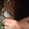 Блогер-выживальщик год провел в дикой природе (видео)
