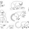 Визуализация дерева приматов