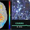 Стимуляция звуком и светом помогает при болезни Альцгеймера, пока у мышей, но результаты обнадеживают