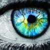 Как устроено зрение у живых существ