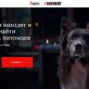 «Яндекс» запустила «Поиск» для потерявшихся домашних животных