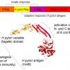 Разработка белков в облаке с помощью Python и Transcriptic или Как создать любой белок за $360