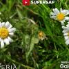 Sony Xperia 1 против Samsung Galaxy S10 Plus: сравнение камер