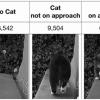 Сотрудник Amazon сделал дверцу на ИИ для кота, чтобы тот не нёс добычу в дом