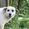 Собаку съел на нейронных сетях