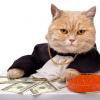 Финансы для PMa в пресейле: как быстро посчитать бюджет и Cash Flow в MS Project