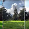 OnePlus 7T против iPhone 11 и Samsung Galaxy S10: сравнение камер