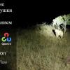 Создание камеры-ловушки с использованием Raspberry Pi, Python, OpenCV и TensorFlow