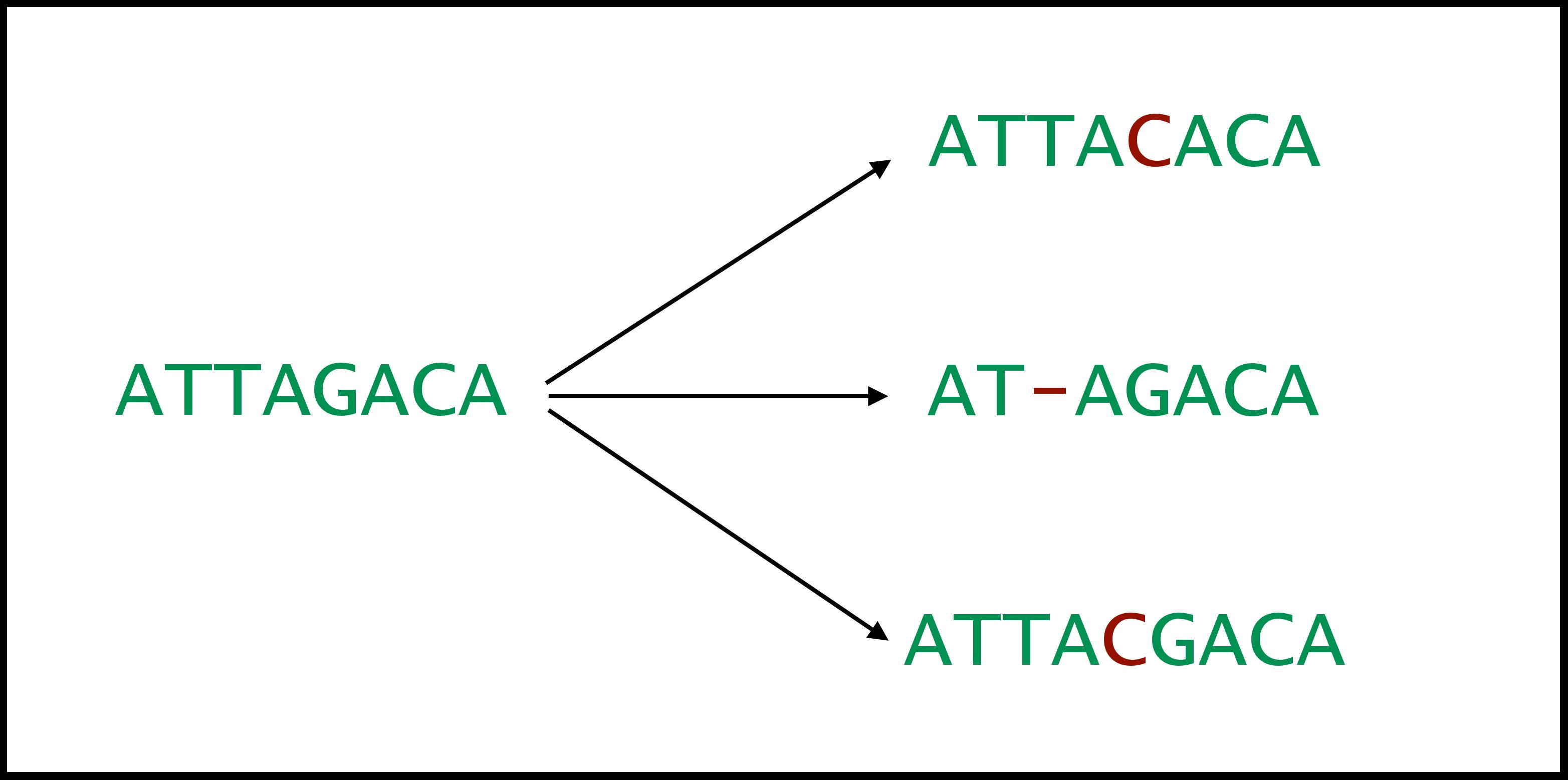 MiTCR – платформа для диагностики нового типа. Семинар в Яндексе