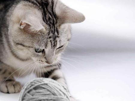 Как зарядить смартфон от кота, ребенка и в лесу