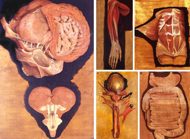 Медицинская анатомическая иллюстрация — история изучения тела человека в атласах 5 столетий. Часть 2