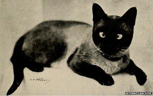 Internet Archive закачает на Flickr более 14 млн свободных исторических изображений