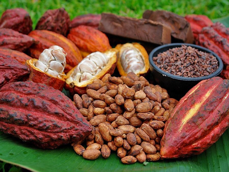 Расшифровка генома какао поможет развитию шоколадной индустрии
