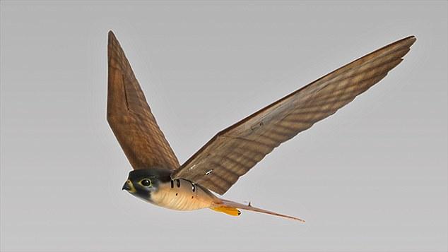 Для защиты аэропортов в Нидерландах создали птиц роботов