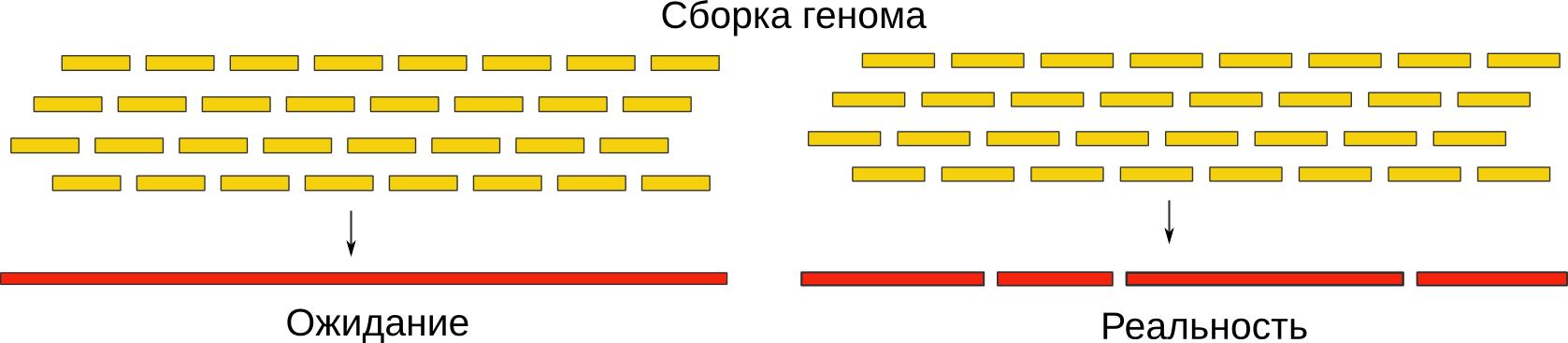 Финиширование генома: быстро, качественно, недорого