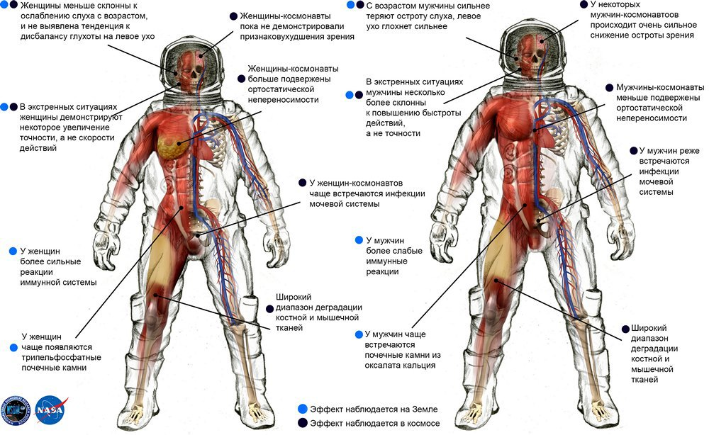 Unique Shin Muscles Anatomy Photos Anatomy And Physiology Biology