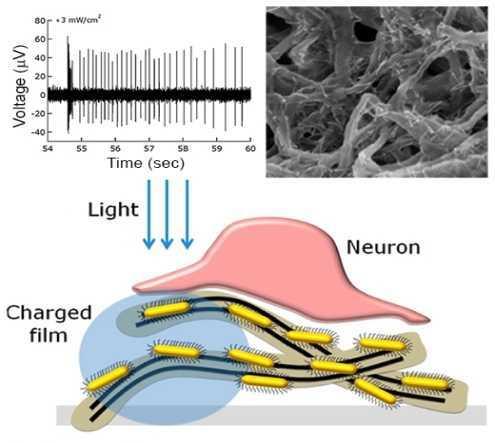 Наноплёнка может заменить повреждённую сетчатку глаза - 1