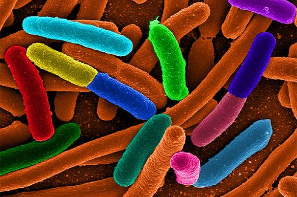 Найден способ производить практически любые химикаты при помощи бактерий - 1