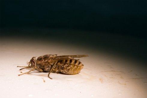 10 смертельных болезней, которые люди подхватили от животных
