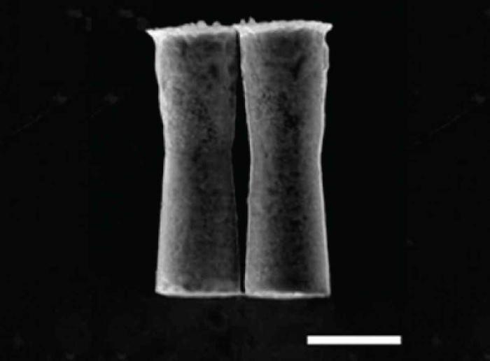 Микроробот доставил лекарственные препараты в желудок живой мыши - 1