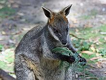 Wallaby.js — маленький зверь с большим будущим - 2