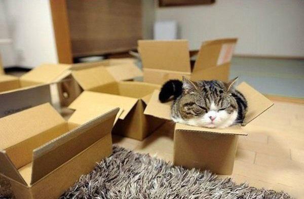 Почему кошки так любят коробки - 2