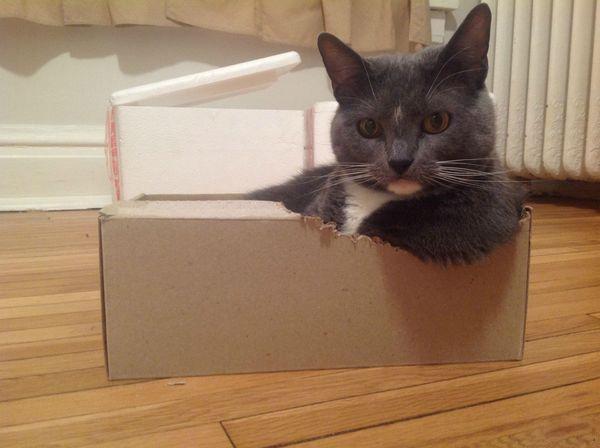 Почему кошки так любят коробки - 4