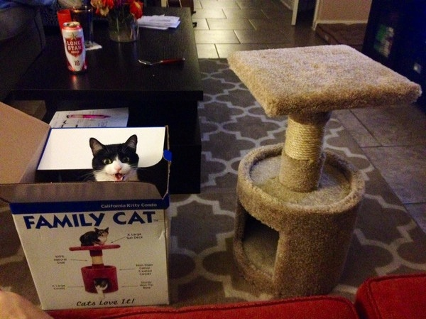 Почему кошки так любят коробки - 1