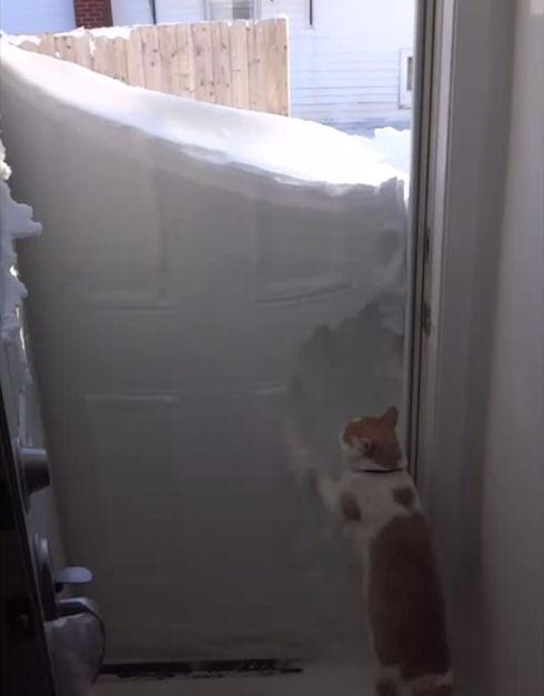 Кот копатель покорил YouTube (ВИДЕО)