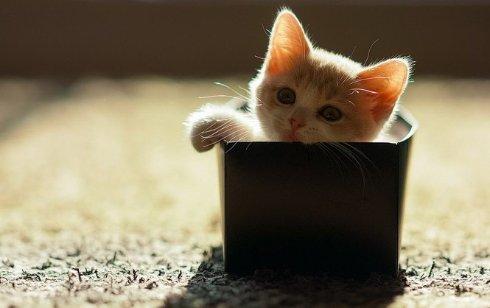 Раскрыт секрет любви котов к коробкам