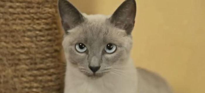 YouTube пометил ролик с мурчаньем кота как нарушение музыкального копирайта - 1