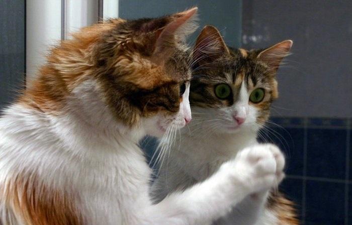 Разбор задачи «Зеркало в коридоре» и негодование - 1