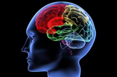 Мозг изменяется под влиянием формы жилого помещения,   ученые