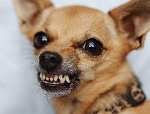Собаки способны распознавать честных и лживых людей,   ученые