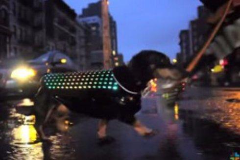Для собак создали диско плащ, чтобы те не терялись